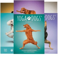 Yoga Dogs Challenges kortos