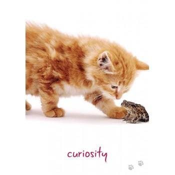 Cat Wisdom kortos